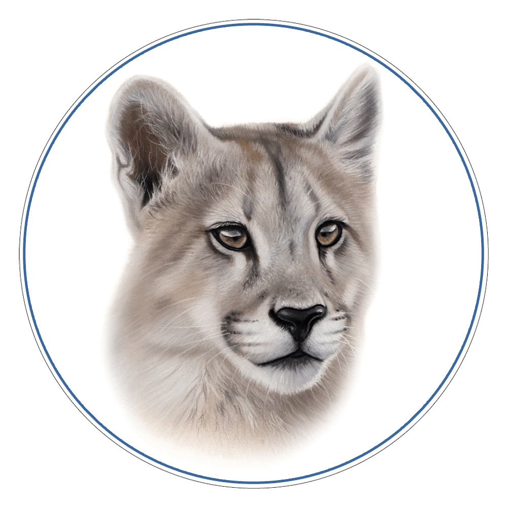 Puma Illustration